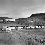 eksteenfontein0005